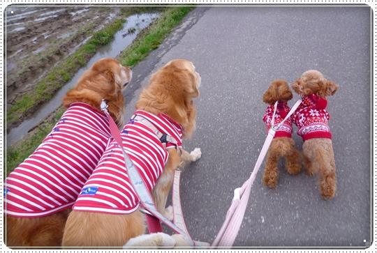 2010,3,29お散歩5