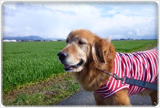 2010,3,29お散歩1