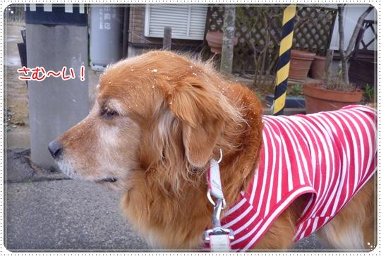 2010,3,29お散歩10