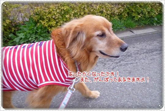 2010,3,29お散歩9