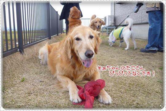 2010,3,30お散歩19