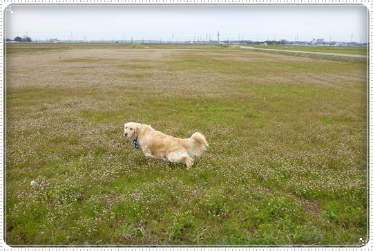 2010,3,31お散歩6