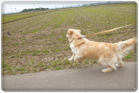 2010,3,31お散歩5