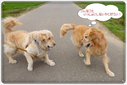 2010,3,31お散歩3