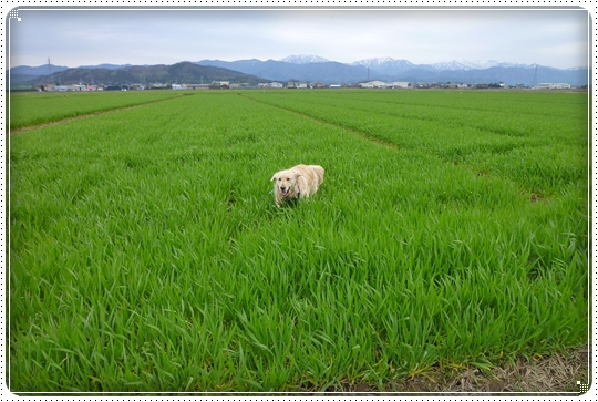 2010,3,31お散歩7