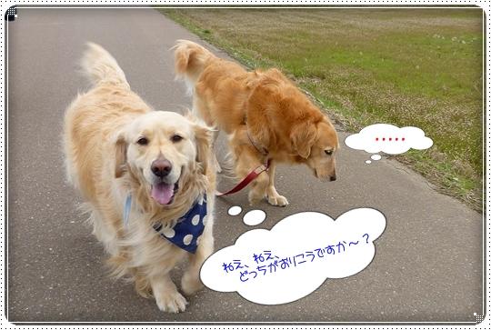 2010,3,31お散歩11