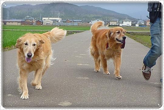 2010,4,2お散歩13