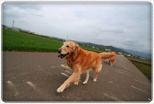 2010,4,2お散歩10