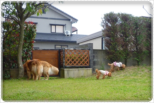 2010,4,5お庭遊び3