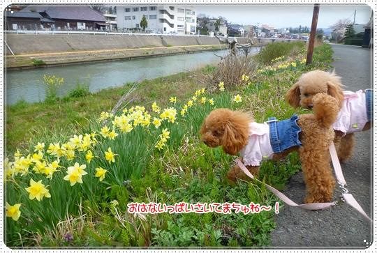 2010,4,6お散歩10