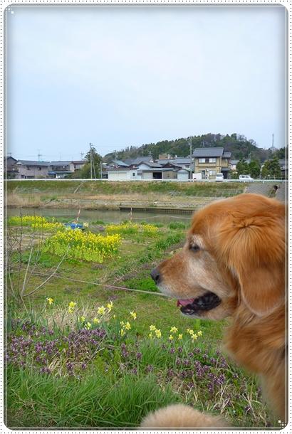2010,4,6お散歩9