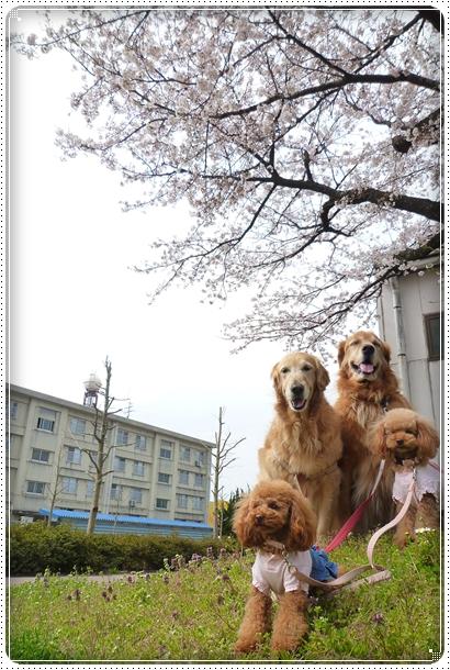 2010,4,6お散歩7