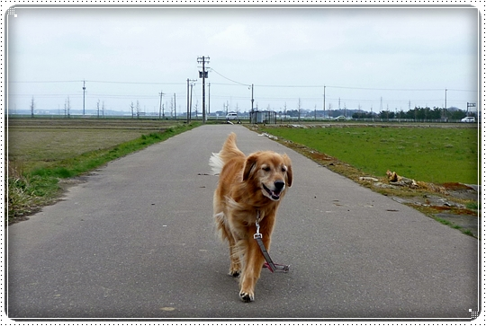 2010,4,7お散歩5