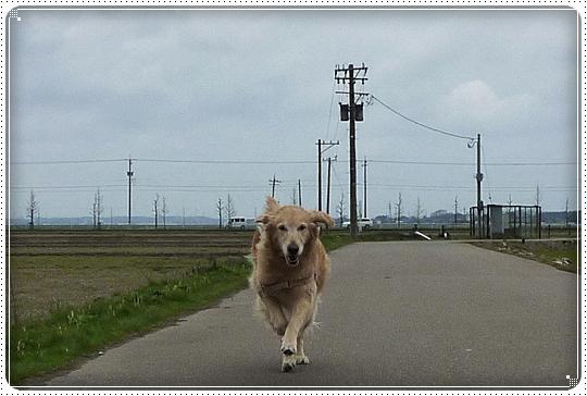 2010,4,7お散歩4