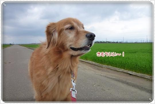 2010,4,7お散歩1