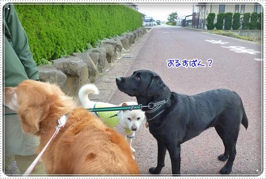 2010,4,7お散歩9