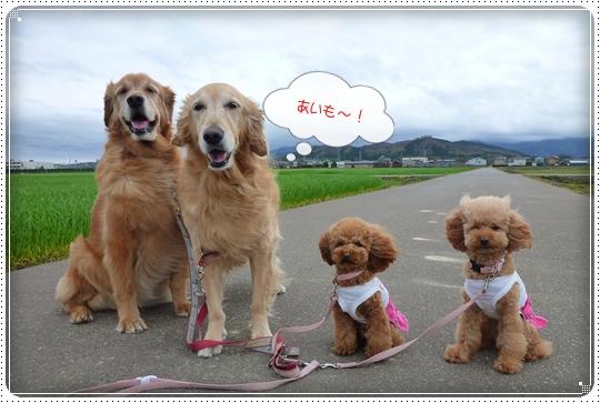 2010,4,13お散歩6
