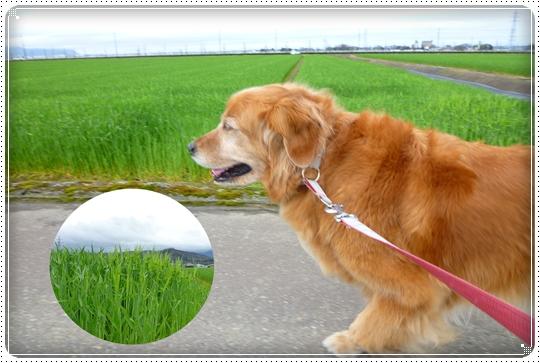 2010,4,13お散歩2