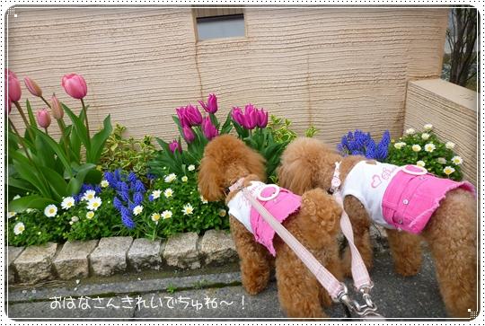2010,4,13お散歩1