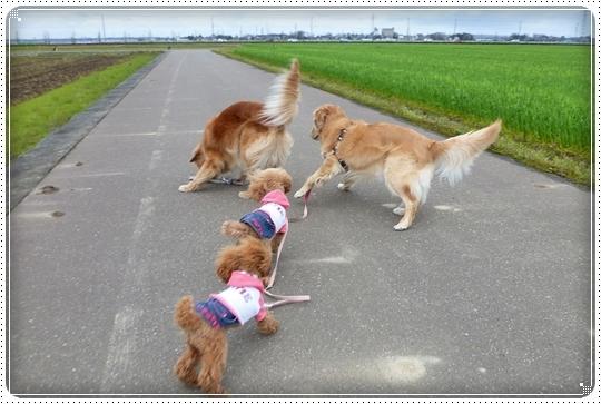 2010,4,16お散歩12