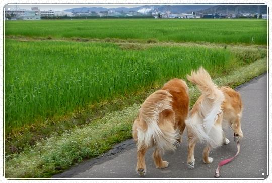 2010,4,16お散歩13