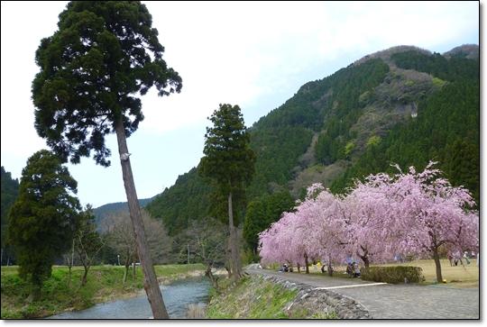 2010,4,19枝垂桜2