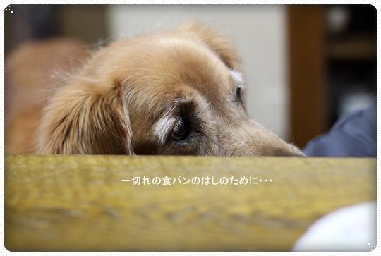 2010,4,20お散歩2