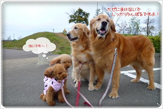 2010,4,20お散歩10