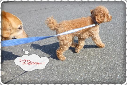 2010,4,22お散歩6