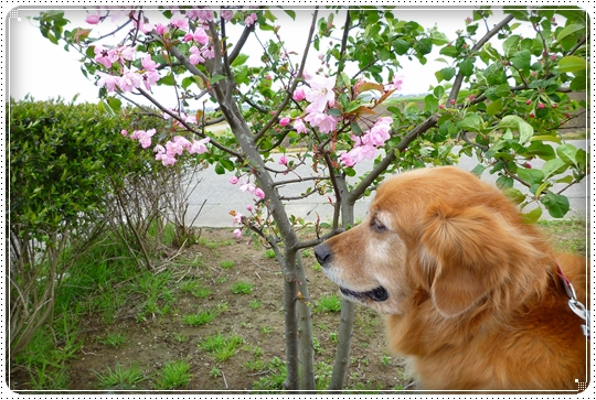 2010,4,22お散歩4