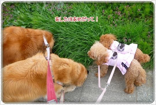 2010,4,22お散歩1
