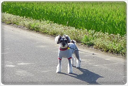 2010,4,22お散歩11