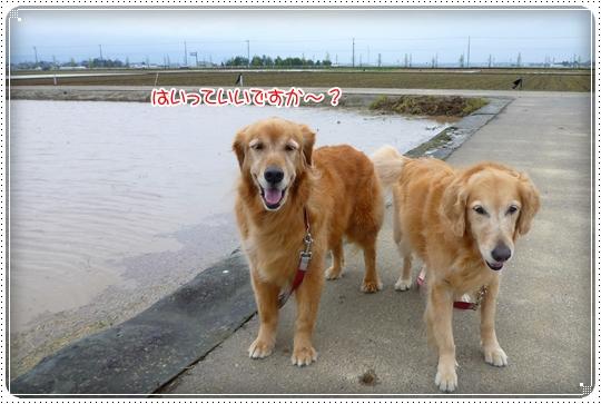 2010,4,23お散歩3