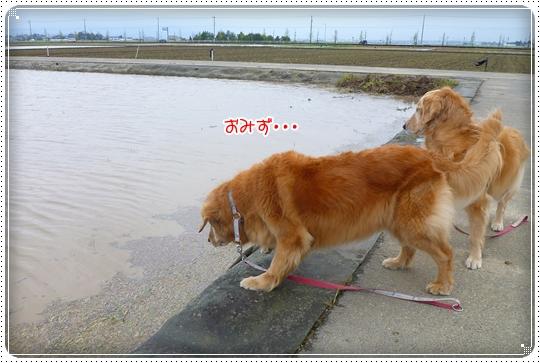 2010,4,23お散歩2