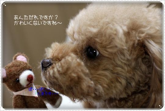2010,4,23お散歩8
