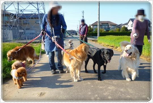 2010,4,24お散歩5