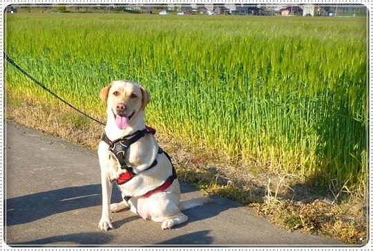 2010,4,24お散歩4