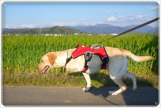 2010,4,24お散歩11