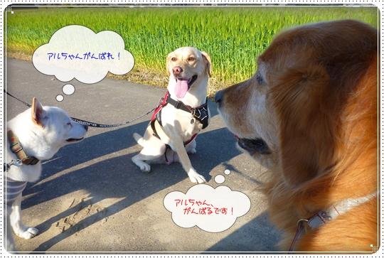2010,4,24お散歩10