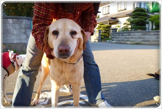 2010,4,24お散歩15