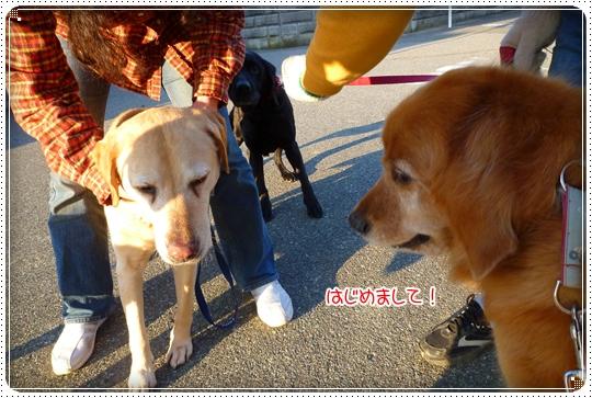 2010,4,24お散歩14