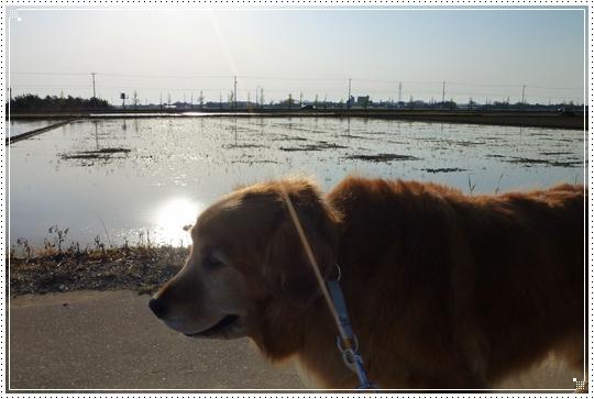 2010,4,25お散歩7