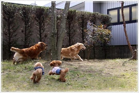 2010,4,26お庭遊び3