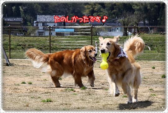 2010,5,1小矢部ドックラン10
