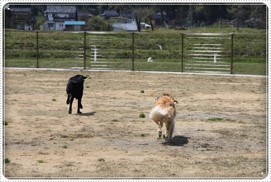 2010,5,2小矢部ドックラン2