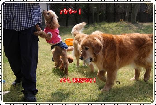 2010,5,4お庭遊び8