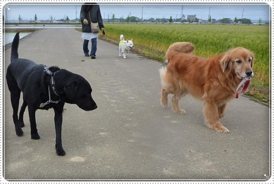 2010,5,12お散歩2