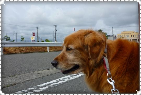 2010,5,12お散歩1