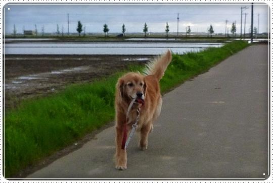 2010,5,12お散歩6