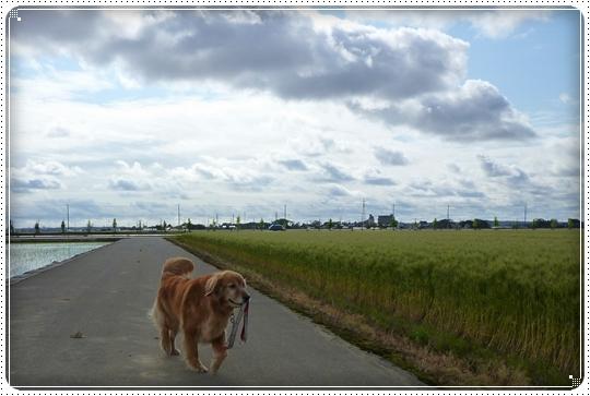 2010,5,13お散歩10